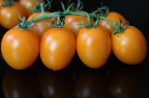 گوجه فرنگی کلاستر