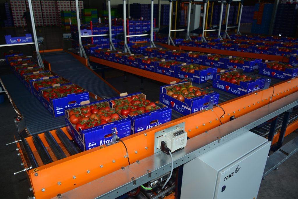 بستهبندی مدرن گوجه فرنگی و فلفل دلمه ای
