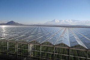 صادرات محصولات کشاورزی گلخانه شیشه ای آتاویتا