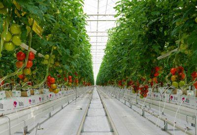 گلخانههای هیدروپونیک آتاویتا