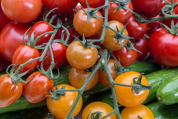 صادرات محصولات کشاورزی حمایت