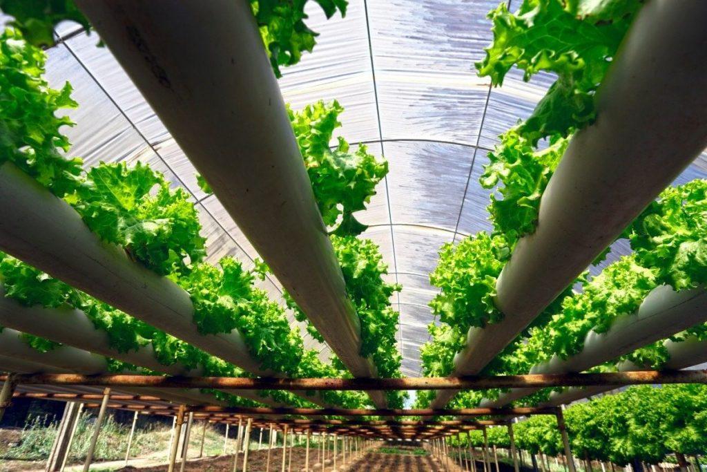 فواید کشت هیدروپونیک در کشاورزی مدرن