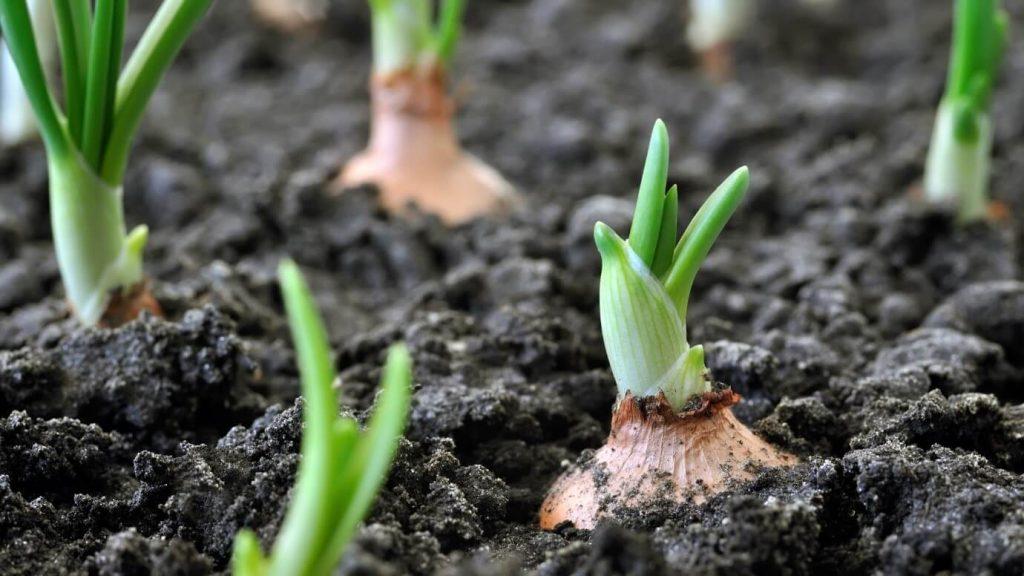 محصولات ارگانیک در خاک