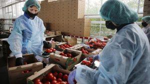 صادرات محصولات کشاورزی به روسیه